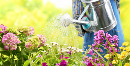 Efficient Landscape Watering Guide